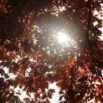 cropped-IMG_0165-800.jpg